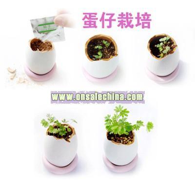 Mini Flower In Egg-Diy Flower
